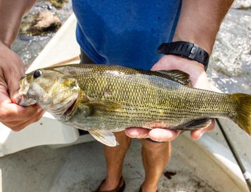 Etowah River Fishing Report 8/13/2018