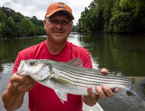 Etowah River Fishing Report 8/20/2018