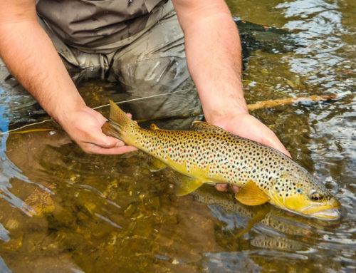 Fishing Report 3/7/19