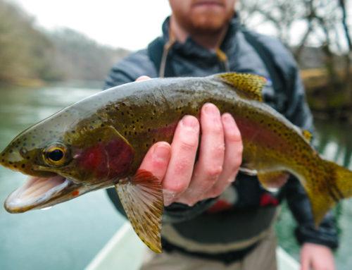 Fishing Report- December 3rd