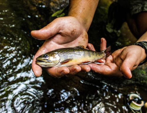 Fishing Report 8/15/2019