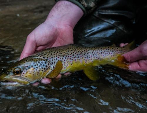 Fishing Report 10/18/2019